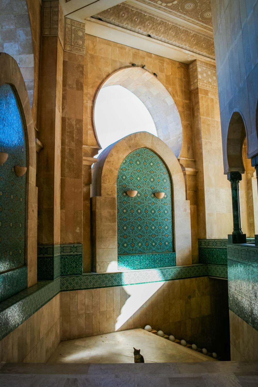Cat in Hassan II Mosque